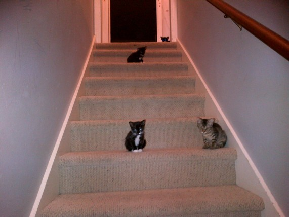 Cats on Stairs 073113