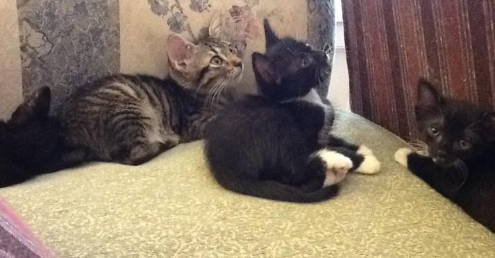 Kittens 06-30-2013