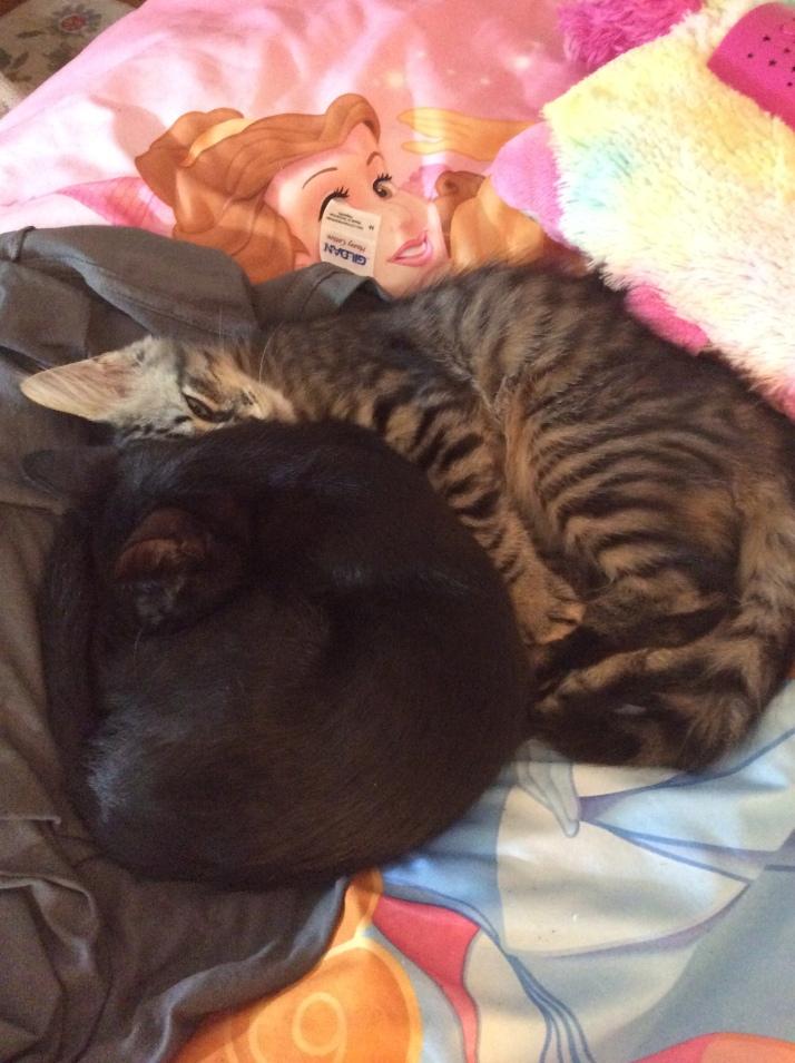 Kittens GGS 2